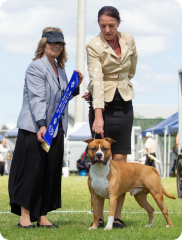 Pine Rivers Kennel Club | Mrs C. Holman (QLD) | Australian Bred In Group | 07.04.19