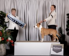 Runner Up Best In Group   17.07.21   Judge: Mrs Melody Darragh (QLD)