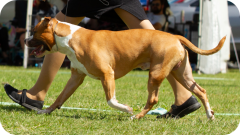 Ares at Pine Rivers Show - April 2019