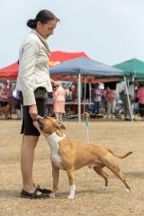 DogsQLD Bushfire Charity Show | Mr Kerry Lee (VIC) | Australian Bred In Group | 23.11.19