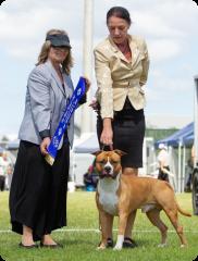 Pine Rivers Kennel Club | Mrs C. Holman (QLD) | Australian Bred In Group | 07.04.19