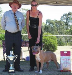 Stoner Best In Show - ASTCQ Open Show 2007 - Judge: Mr M. Towell (QLD)