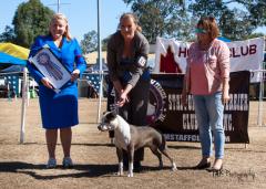 Winning most promising puppy under Mrs M. Jurek-Erenska (Poland - Florida ASTs) 2014