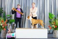 Australian Bred In Group   14.06.21   Judge: Mrs Ines Dawes (QLD)